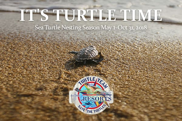 St Augustine Sea Turtle Time