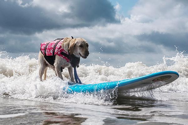 Pups Sups Event